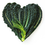 Heart-shaped formed by fresh Black Kale