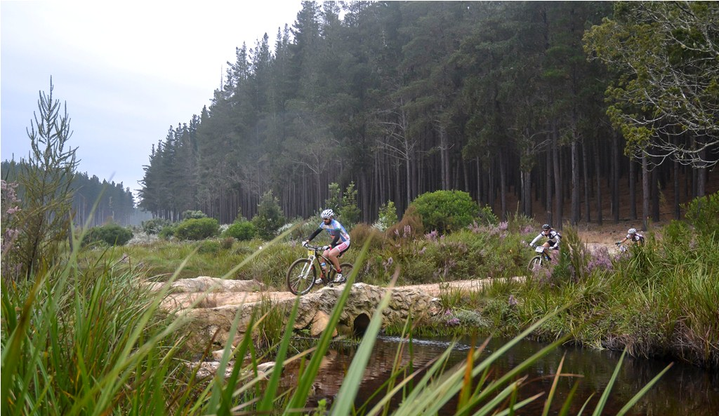 The plantations and indigenous forests surrounding Knysna are the perfect MTB playground.  Photo by Julie Ann Hoffman.
